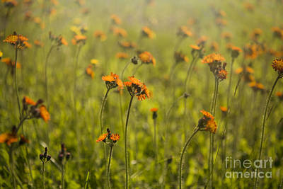Photograph - Summer Wildflowers by Diane Diederich