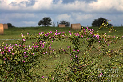Photograph - Summer Wildflowers On Barbed Wire Fence by Ella Kaye Dickey