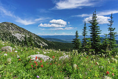 Photograph - Summer Wildflowers On Big White by Dave Matchett