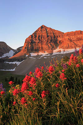 Art Print featuring the photograph Summer Wildflowers On Timpanogos. by Johnny Adolphson