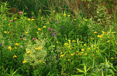 Art Print featuring the photograph Summer Wildflowers by Smilin Eyes  Treasures