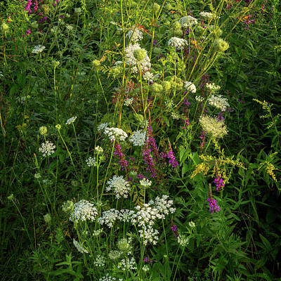 Photograph - Summer Wildflowers Square by Bill Wakeley