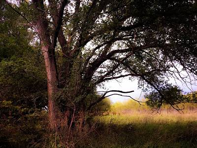 Photograph - Summer Wildwood by Michele Carter