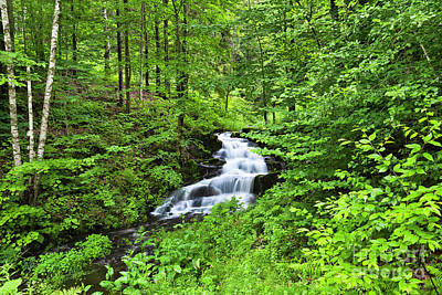 Photograph - Summer Woodland Waterfall by Alan L Graham