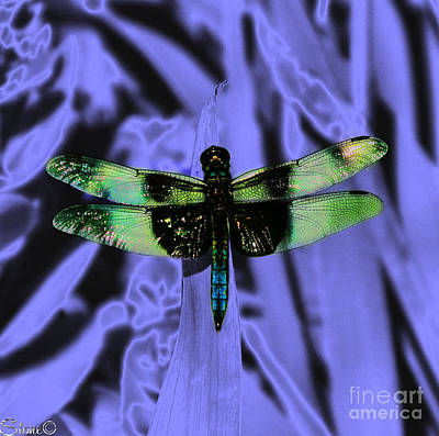 Photograph - Summerlands Dragonfly  by September  Stone