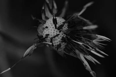 Photograph - Summer's Coming by Jessica Myscofski