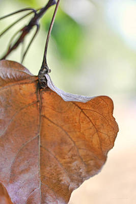 Photograph - Dry Leaf by Jennie Marie Schell