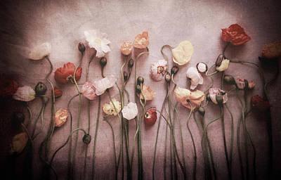 Photograph - Summer's End - Warm by Susan Maxwell Schmidt