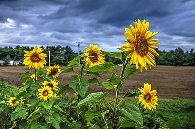 Photograph - Summers Over by John Nielsen