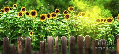 Photograph - Summer's Sunflowers by Susan Warren