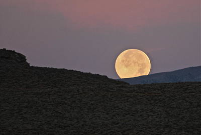 Photograph - Summers Super Moon by Patricia Haynes