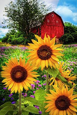 Photograph - Summertime Fields by Debra and Dave Vanderlaan