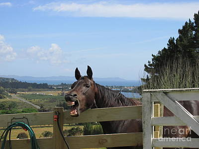 Photograph - Summertime Horsey Yawn by Dianne  Connolly