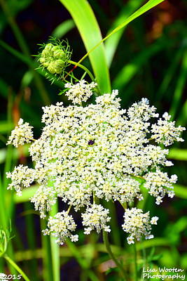 Photograph - Summertime Lace by Lisa Wooten