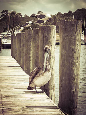 Keith Richards - Summertime Pelicans by Debra Forand