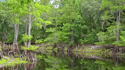 Photograph - Summertime Reflections by Carol Bradley