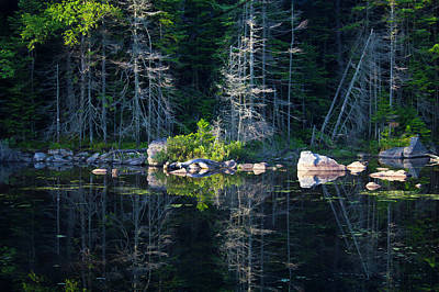 Summertime Reflections On The Lake Art Print