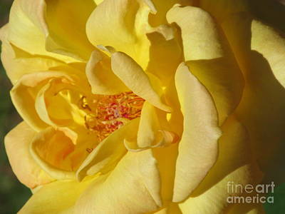 Photograph - Summertime Rose by Loretta Pokorny