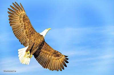 Photograph - Sun American Bald Eagle by LeeAnn McLaneGoetz McLaneGoetzStudioLLCcom