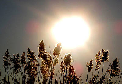 Sun And Grass 2  Art Print by Lyle Crump