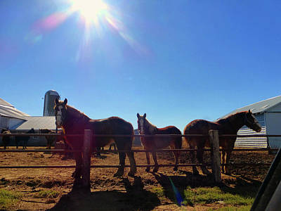 Photograph - Sun And Horses by Tina M Wenger