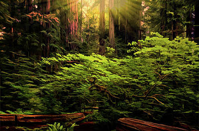 Photograph - Sun Bathed Trees by Maria Coulson
