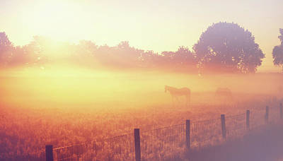 Photograph - Sun Bathing Horses by Jenny Rainbow