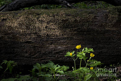 Sun Beam On Log Art Print