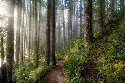 Hiking Photograph - Sun Beams Along Hiking Trail In Washington State Park by David Gn