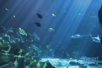 Photograph - Sun Beams In Aquarium by Roberta Byram