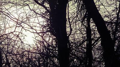 Photograph - Sun Behind The Trees C by Jacek Wojnarowski