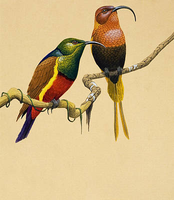 Sun Birds Art Print by English School