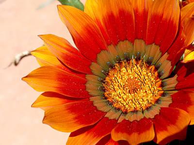 Sun Bloom Of Fire Art Print by Edan Chapman