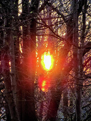 Photograph - Sun Burning Through The Trees by Bob Slitzan