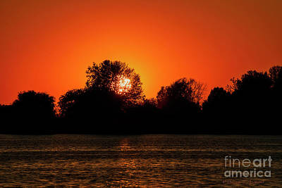 Photograph - Sun Caught In Branches by David Arment