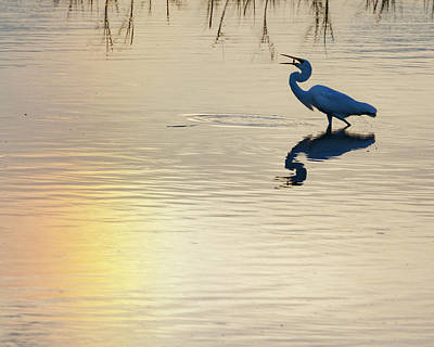 Photograph - Sun Dog And Egret 1 by Rob Graham