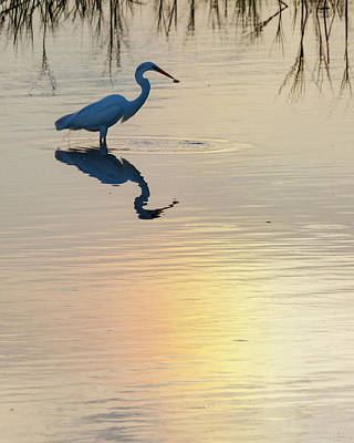 Photograph - Sun Dog And Great Egret 2 by Rob Graham