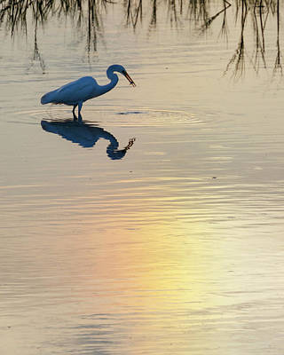 Photograph - Sun Dog And Egret 3 by Rob Graham