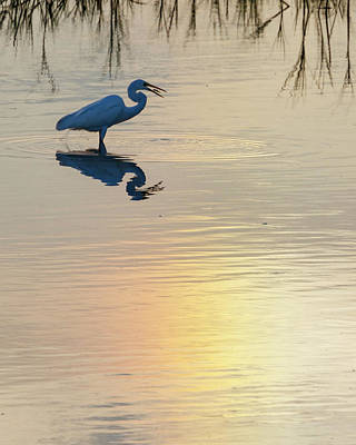 Photograph - Sun Dog And Egret 4 by Rob Graham