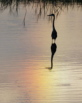 Photograph - Sun Dog And Heron 1 by Rob Graham