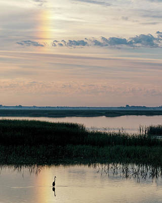 Photograph - Sun Dog And Heron 2 by Rob Graham
