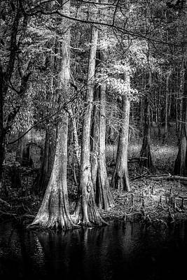 Cypress Swamp Photograph - Sun Drenched by Marvin Spates