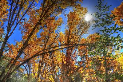Jerry Sodorff Royalty-Free and Rights-Managed Images - Sun Fall Color 4539 by Jerry Sodorff