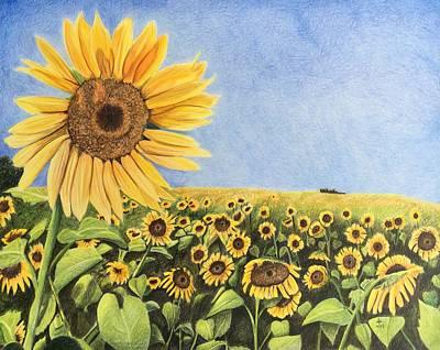 Sun Fields Art Print