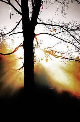 Photograph - Sun Fire by Susan McMenamin