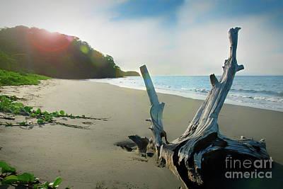 Photograph - Sun Flare Beach by Ed Taylor