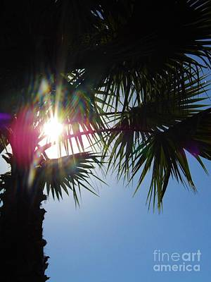 Photograph - Sun Flare Palm by D Hackett