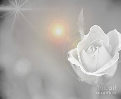 Photograph - Sun Flare  Rose White  by Peggy Franz