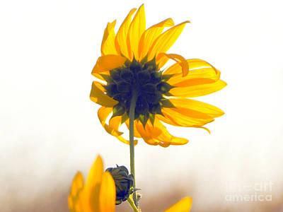 Sun Flower 101 Art Print
