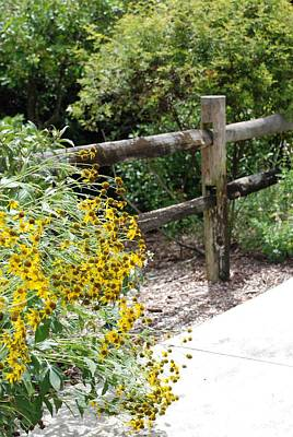 Photograph - Sun Flower Fence by Rob Hans